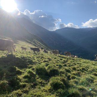 Alp Rischuna - Vals